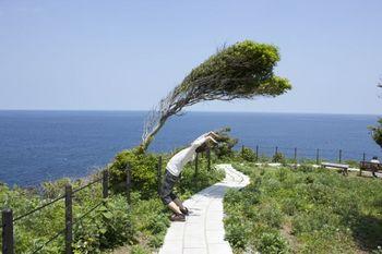 風に吹かれた面白い木21.jpg